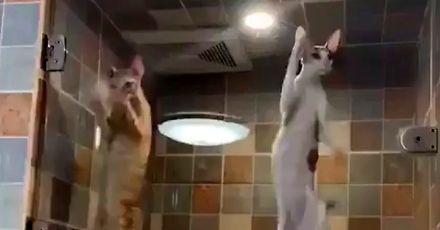 Koty odnalezione podczas szturmu na Strefę 51