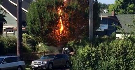 Ciekawy efekt spalającego się drzewa