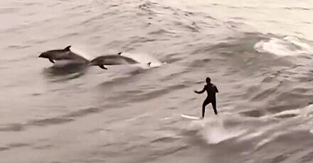 Surfowanie z delfinami