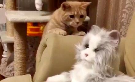 Kotki nabierają się na jakiegoś przebierańca