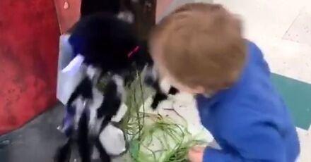 Włochaty stwór rzuca się na dzieciaka