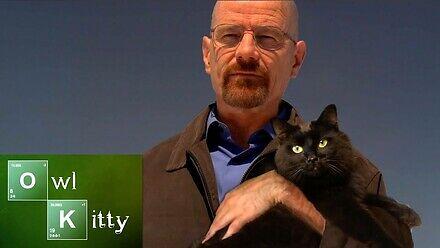 A co gdyby Walter White miał kota?