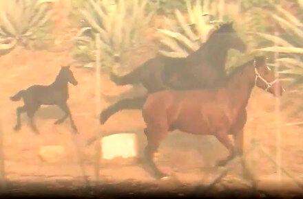Koń sam uratował swoją rodzinę