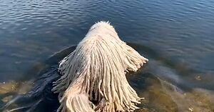 Honga - pies, który został pływającym mopem i gwiazdą internetu