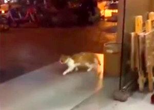 Kot odstawia moonwalk Jacksona