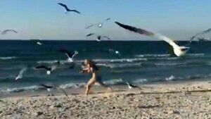 Dlatego nie należy karmić mew na plaży