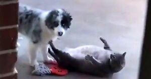 Pies zakłóca przemianę kota w fokę