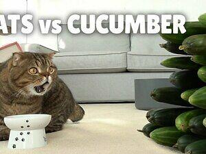 Macie już dość kotów, które boją się ogórków? Te koty też...