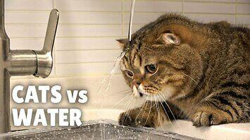 Co się stanie, gdy zostawisz odkręcony kran w mieszkaniu pełnym kotów