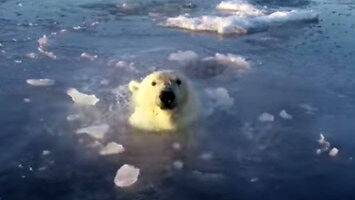 Polarne misie polują spod lodu na drona