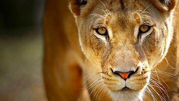Królowa dżungli? Ty zwykła pi*da jesteś, nie królowa dżungli!