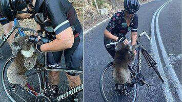 Kiedy aż tak chce ci się pić, że nawet rowerzystę poprosisz
