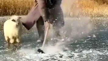 Kiedy Mongoła najdzie ochota na rybkę