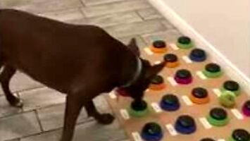 Pies uczy się porozumiewać, używając maty dźwiękowej