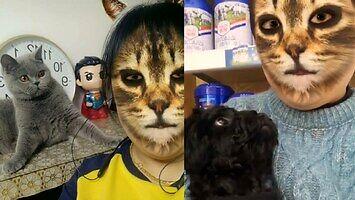 Domowe zwierzaki i koci filtr twarzy