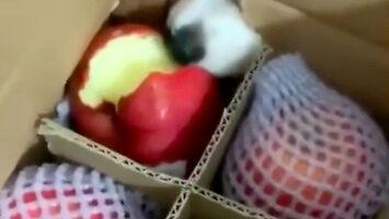 Złodziej jabłek przyłapany na gorącym uczynku