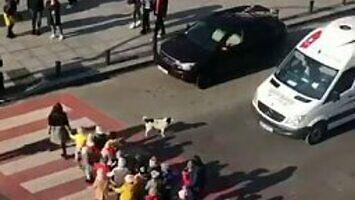 Pies z Gruzji został bohaterem, bo pomaga przejść dzieciom przez ulicę