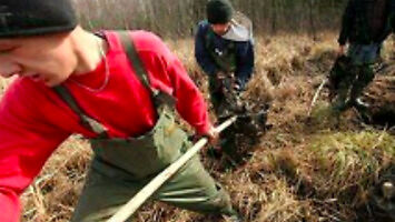 Tak wyglądają odłowy bobrów w Polsce