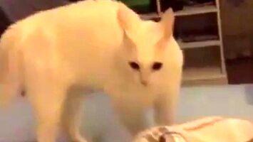 Kotu się coś pomieszało
