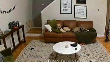 Jesteśmy pod wrażeniem inteligencji psa