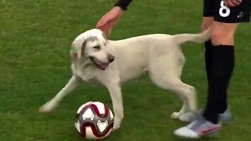 Pies okazał się najlepszym zawodnikiem meczu