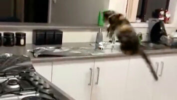 Folia aluminiowa powstrzymała kota