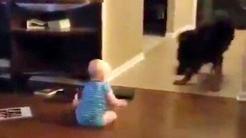 Owczarek niemiecki bawi się z dzieckiem