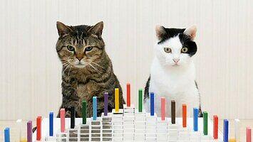Koty i domino - po prostu