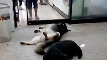 Psy nie chcą, żeby tłumy pchały się do sklepu