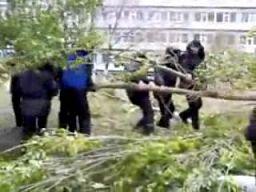 Rosyjski milicjant kontra drzewo