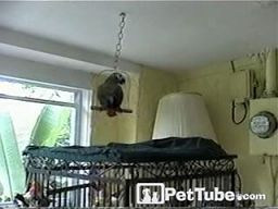 Zakręcona papuga