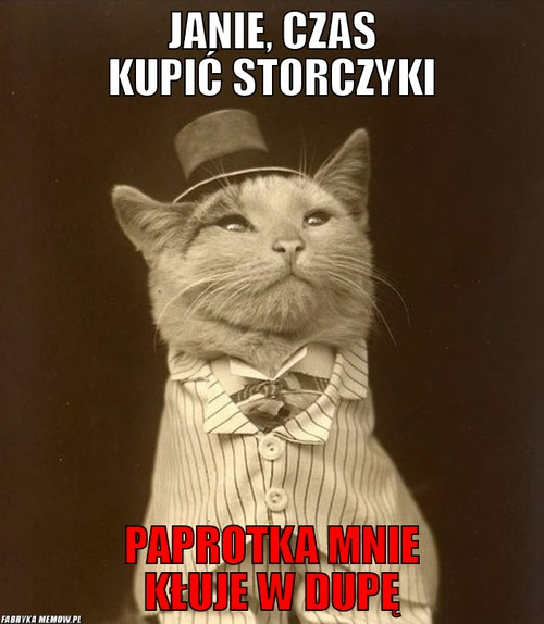 Jaśniepan Kot Internetowy Mem Joe Monster