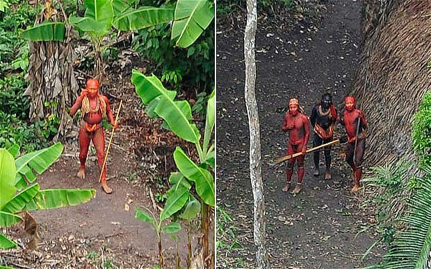 Red Face Paint Amazon Plant