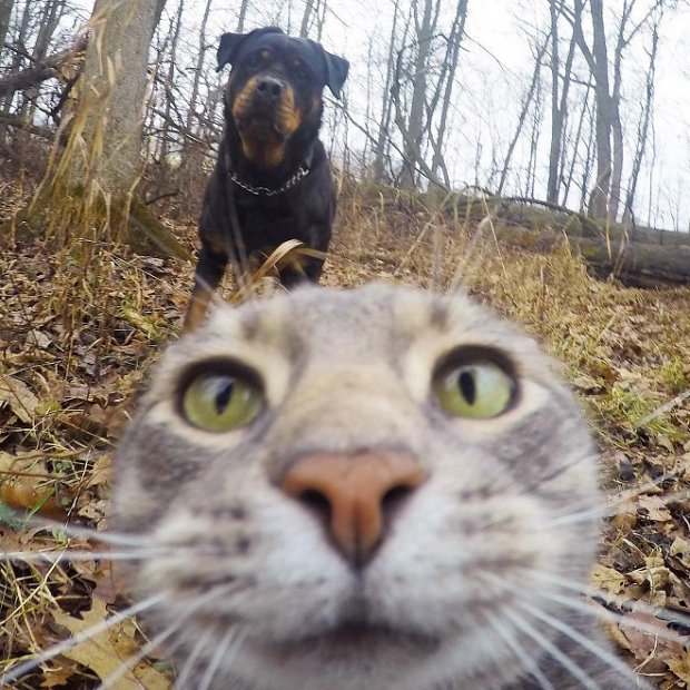 selfie-leaves
