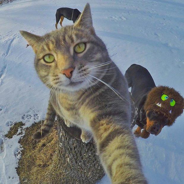 selfie-dog
